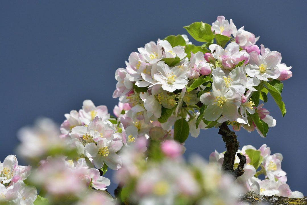 13. – 16.05.21: 4-tägige Genussreise zur Apfelblüte in die Steiermark